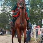 Бородино, реконструкция сражения. 04,05-09-2010 Бородино